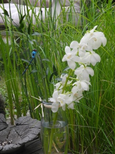 a beautiful stem of orchids with an amazing dragonfly... two of my favourite things...