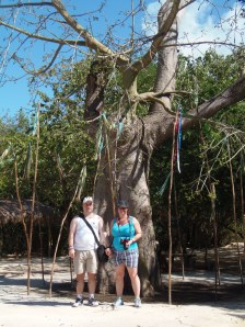 the kapok tree on our stroll...