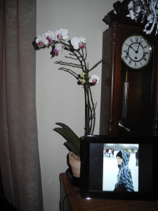 orchids and frame...