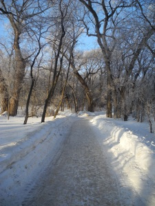 hoarfrost along the walking path...