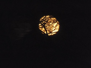 moon through the trees...