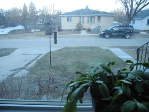 yesterday morning... no snow in the front yard...