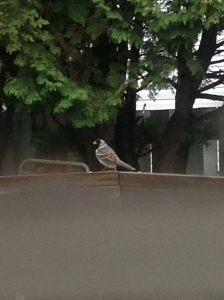 new bird visitor...
