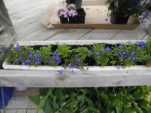 planters around the deck...