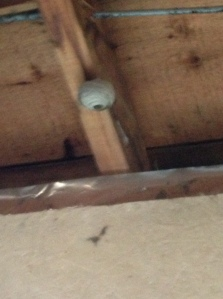 wasp nest starting in the garage...