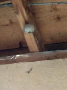 wasp nest starting in the garage...