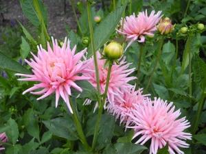 beautiful pink flowers...