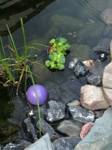 float in the pond that doesn't seem to be leaking...