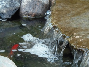 fish looking for food by the waterfall...