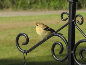 cute bird on the feeder, not sure what it is...
