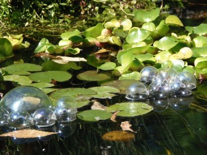 rearranged floating objects in the pond...