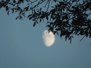 better shot of the moon through the tree...