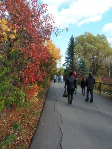 beautiful fall colours as the family moves on the see the kangaroos...