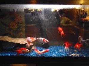 fish in the winter condo...