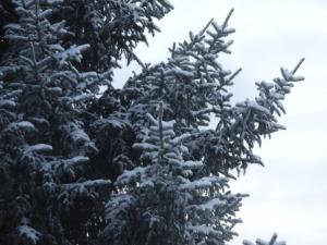 snow on the tree...