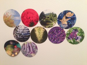 Advent magnet collection to date...