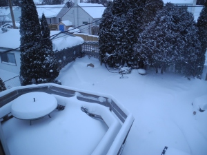 snow in the garden before yesterday and today's snowfall...