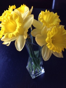 daffodils from a friend...