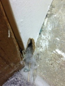 spider den in the drywall...
