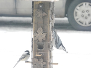 nuthatch and a chickadee at the feeder...