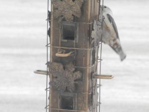 woodpecker...