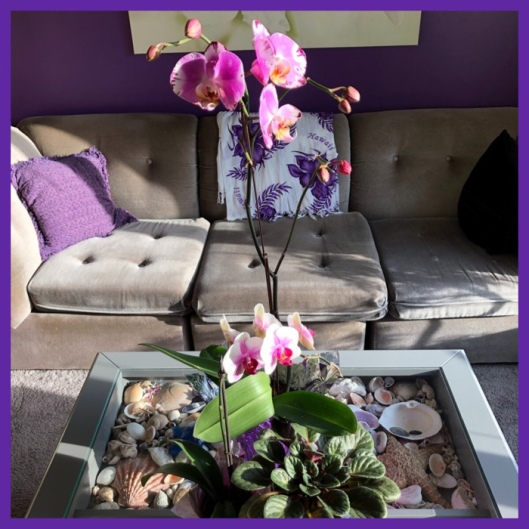 two purple orchids on living room coffee table